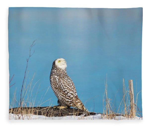 Snowy Watching A Plane Fleece Blanket