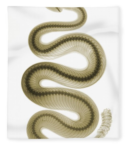 Southern Pacific Rattlesnake, X-ray Fleece Blanket