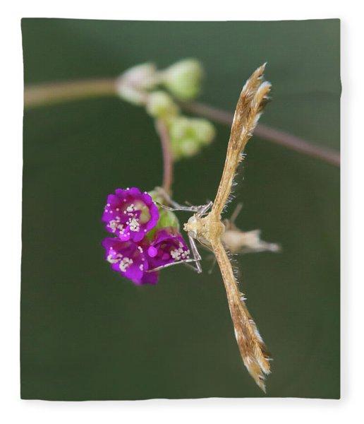 Spiderling Plume Moth On Wineflower Fleece Blanket