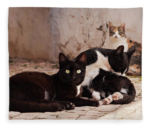Fleece Blanket featuring the photograph Street Cats - Portugal by Barry O Carroll