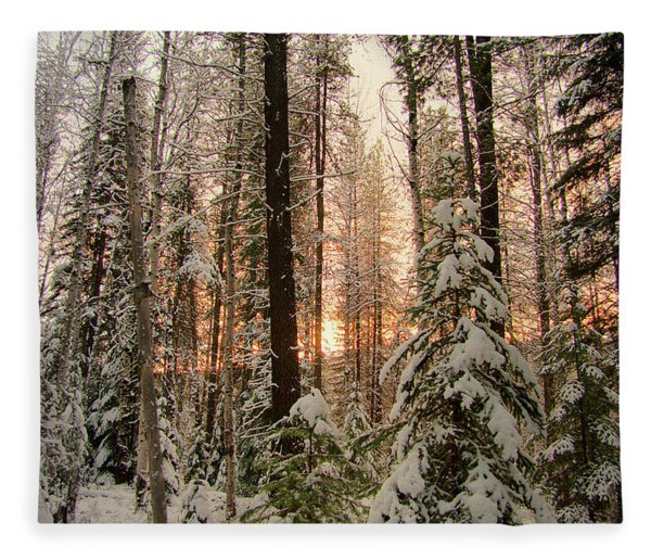 Sun Of Winter Trees Fleece Blanket