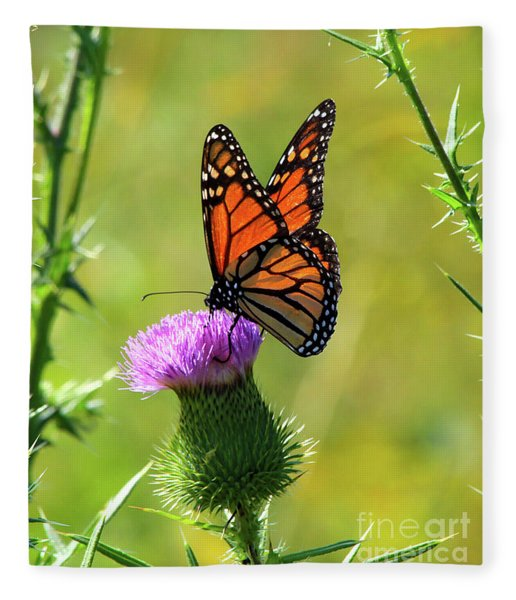Sunlit Monarch  Fleece Blanket
