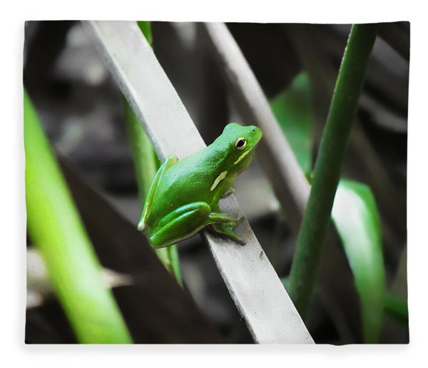 Tree Frog Fleece Blanket