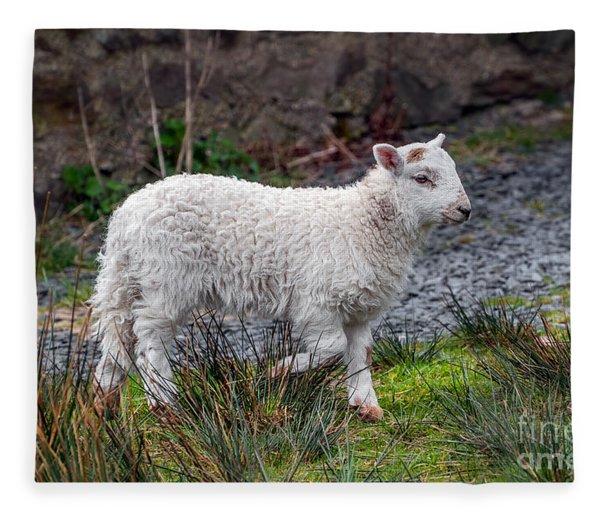 Welsh Lamb Fleece Blanket