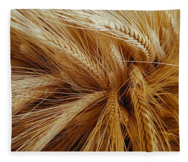 Wheat In The Sunset Fleece Blanket