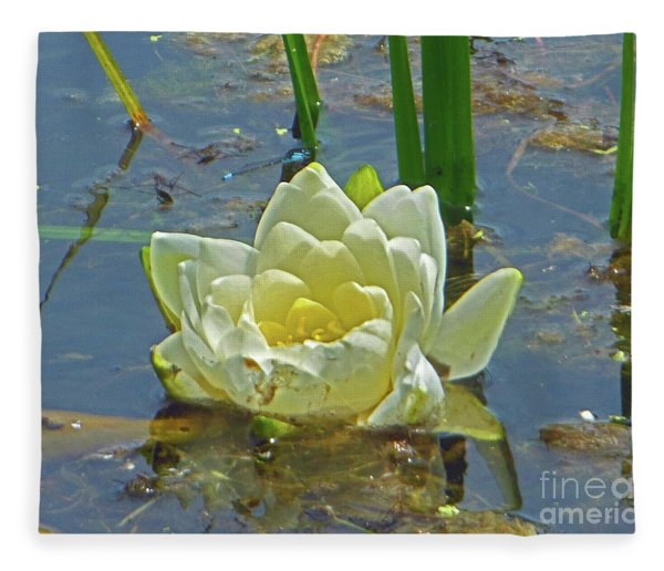 Yellow Nymphaea Alba Damselfy Fleece Blanket