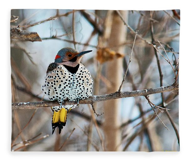 Yellow-shafted Northern Flicker Staying Warm Fleece Blanket