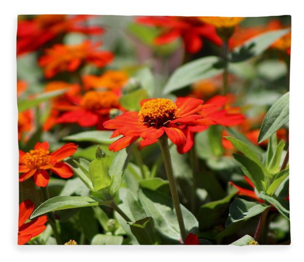 Zinnias In Autumn Colors Fleece Blanket