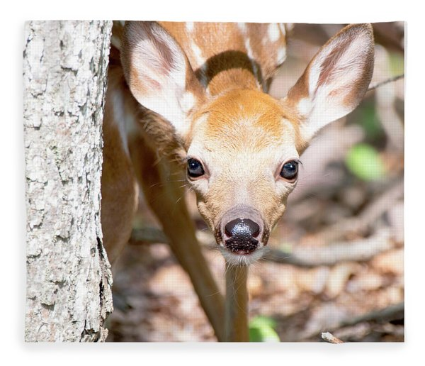 White-tailed Deer Fawn, Animal Portrait Fleece Blanket