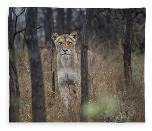 A Lioness In The Trees Fleece Blanket
