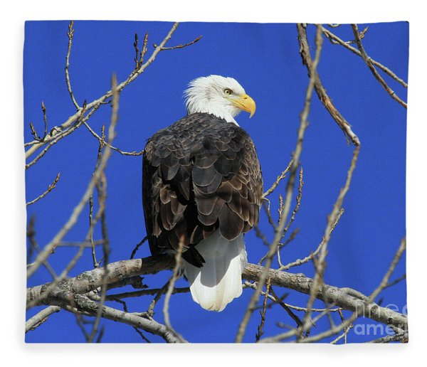 Bald Eagle And Blue Sky Fleece Blanket