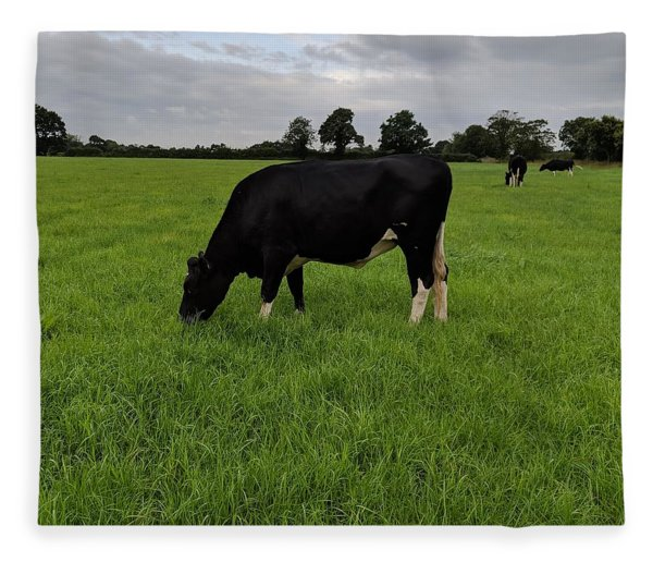 Beautiful Dairy Heifer Fleece Blanket