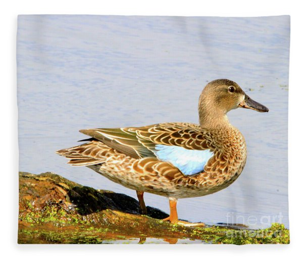 Blue-winged Teal Female Duck Fleece Blanket