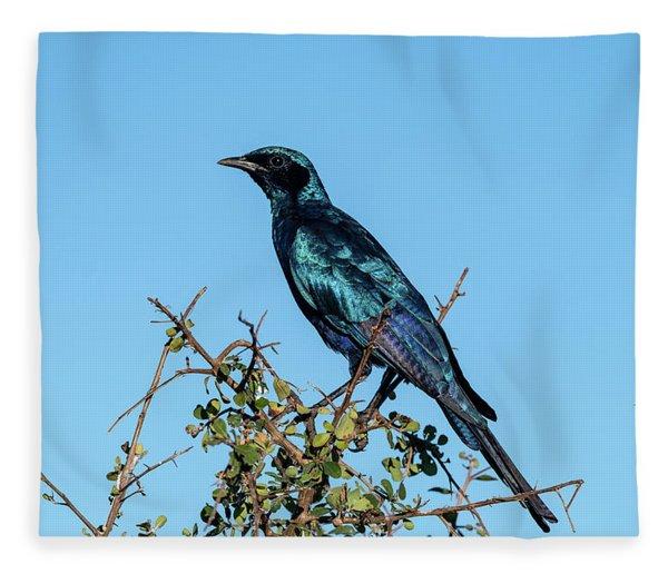 Burchell's Starling Fleece Blanket