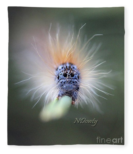 Caterpillar Face Fleece Blanket