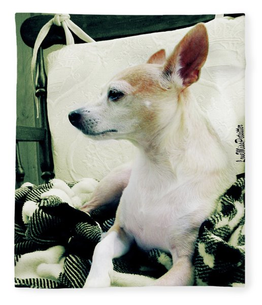 Chihuahua  Portrait  Fleece Blanket