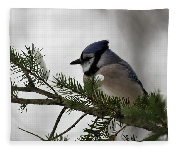 Chilly Jay Fleece Blanket