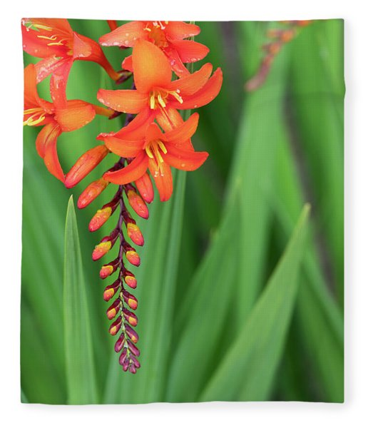 Crocosmia Zeal Unnamed Flower Fleece Blanket