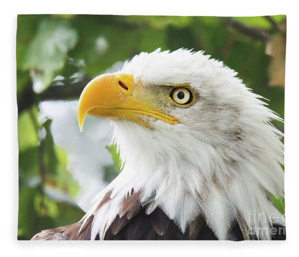 Bald Eagle Perched In A Tree Fleece Blanket