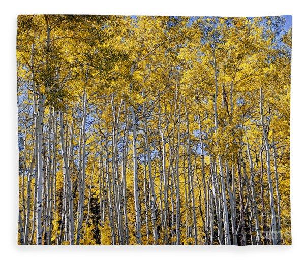 Golden Aspen Grove Fleece Blanket