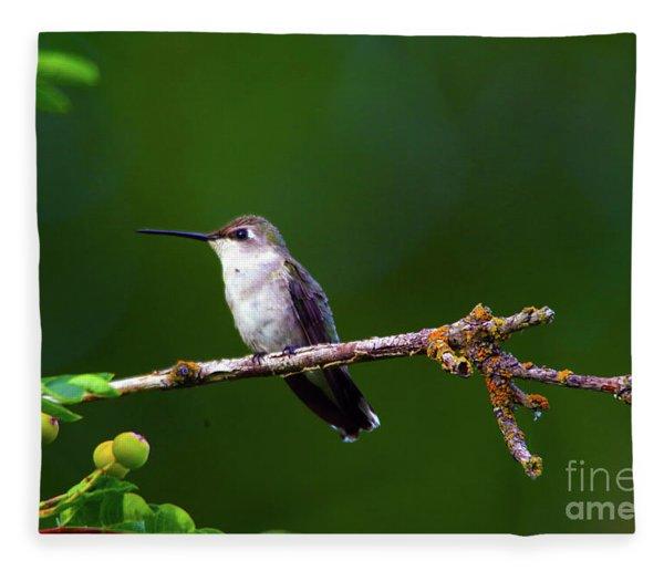Hummingbird Parking It On A Tree Branch Fleece Blanket