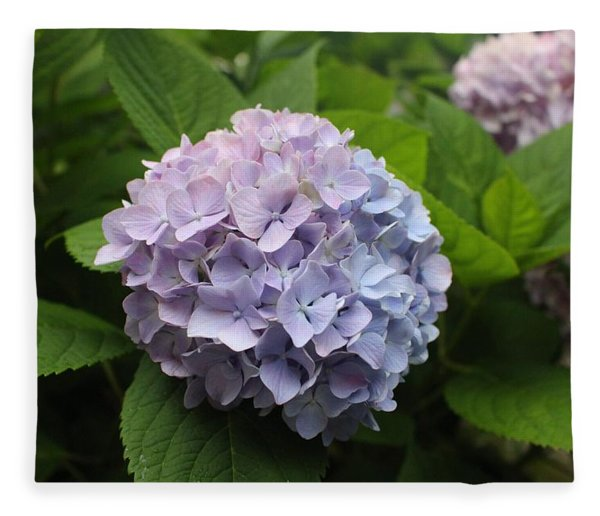 Lavender Hydrangea, Cape May Fleece Blanket