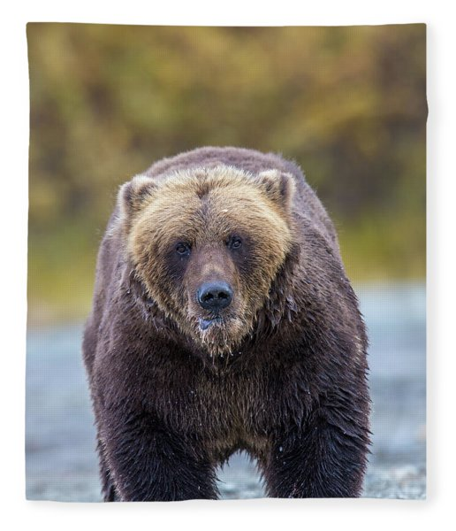 Lazy C Angry Bear  Fleece Blanket