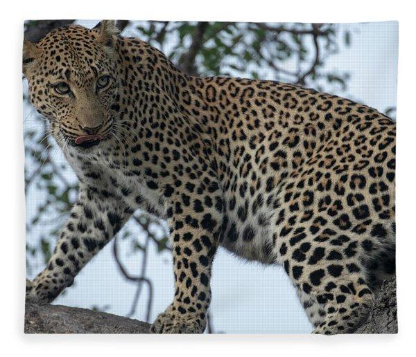 Leopard Anticipation Fleece Blanket