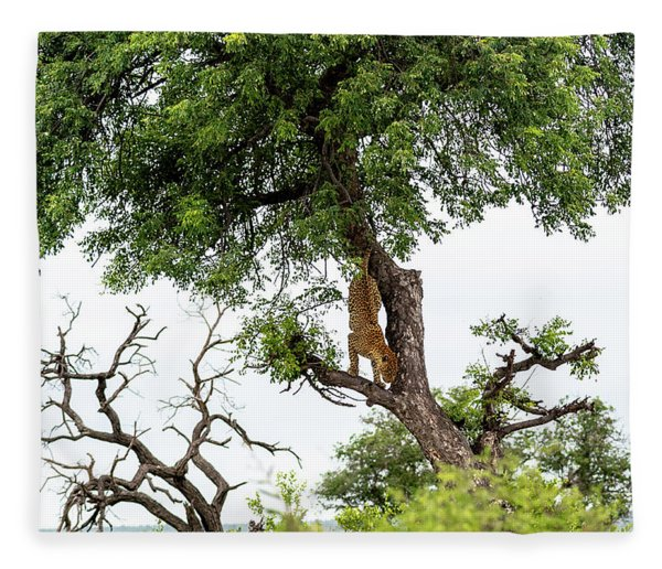 Leopard Descending A Tree Fleece Blanket