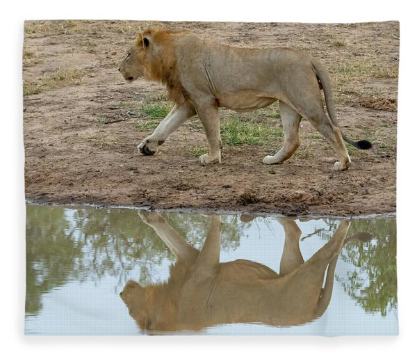 Male Lion And His Reflection Fleece Blanket