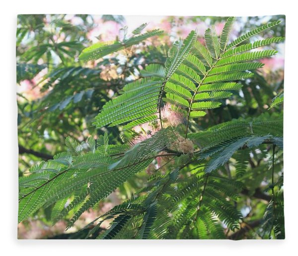 Mimosa Tree Blooms And Fronds Fleece Blanket
