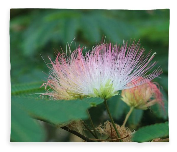 Mimosa Tree In Bloom Fleece Blanket