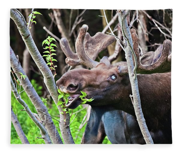 Moose With An Anomalous Eye, At Dinner Time Fleece Blanket