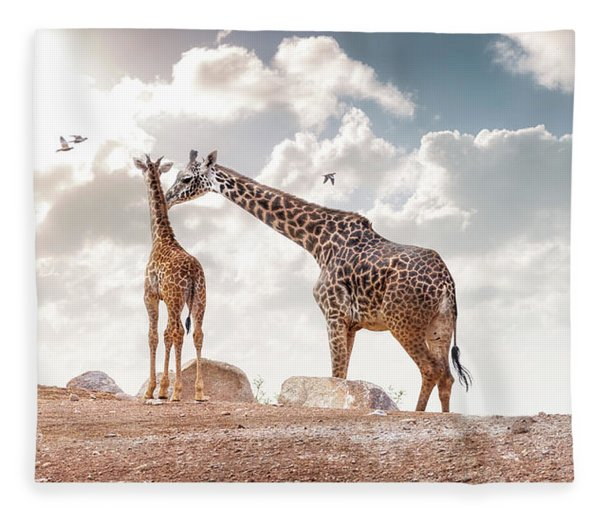 Mother Showing Affection To Baby Masai Giraffe Fleece Blanket