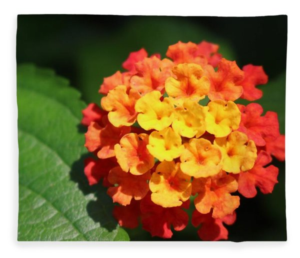 Orange Lantana Fleece Blanket