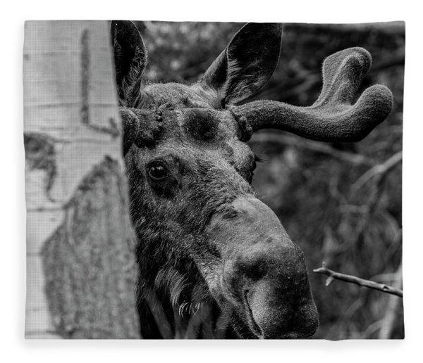 Peek-a-moose Fleece Blanket