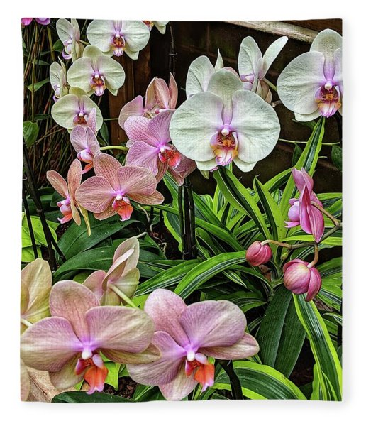 Pink And  White Orchids Fleece Blanket