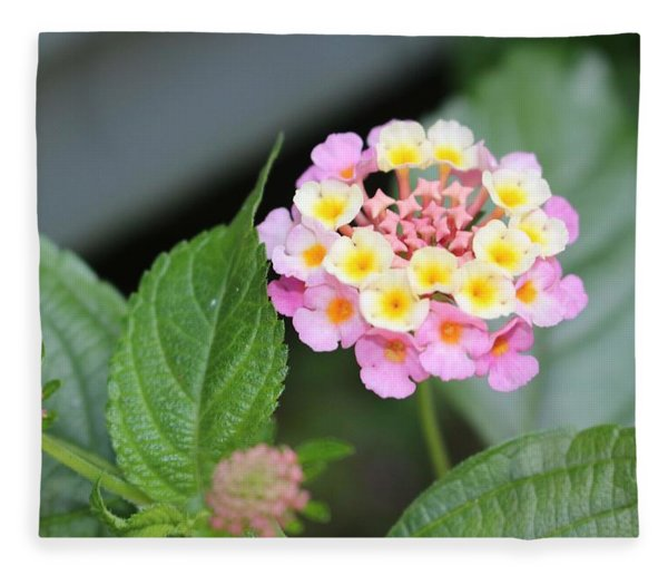 Pink Lantana Fleece Blanket