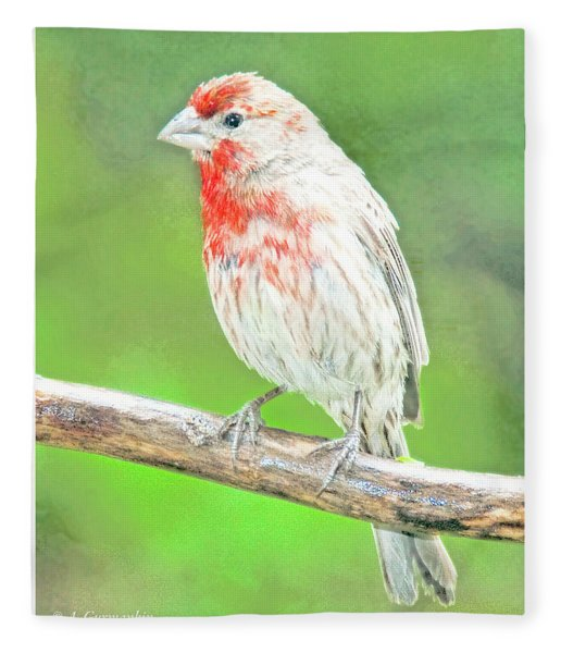 Purple Finch, Animal Portrait Fleece Blanket