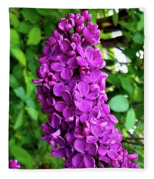 Purple Lilac Parade Fleece Blanket