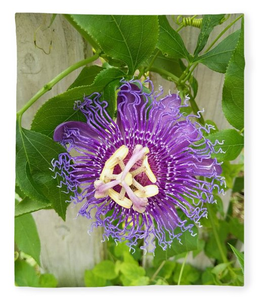 Purple Passionflower Fleece Blanket