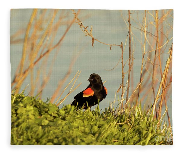 Red Wing Blackbird  Fleece Blanket