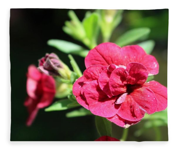 Scarlet Geranium In Cape May Fleece Blanket
