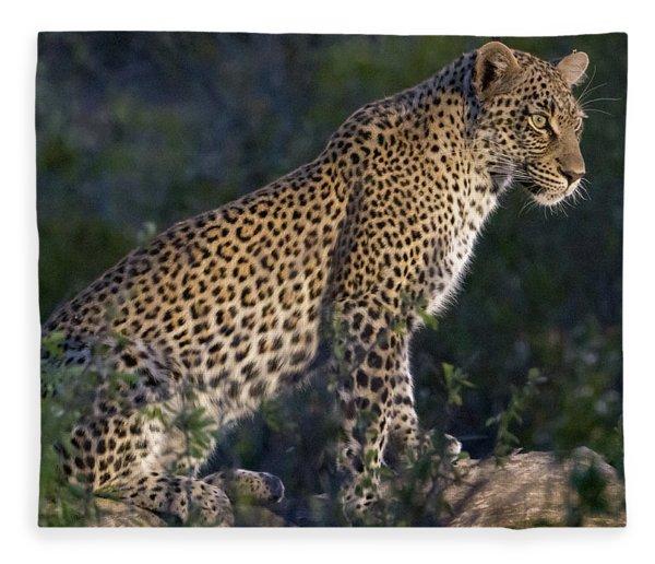 Sitting Leopard Fleece Blanket