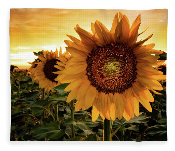 Sunflower Sunset Fleece Blanket
