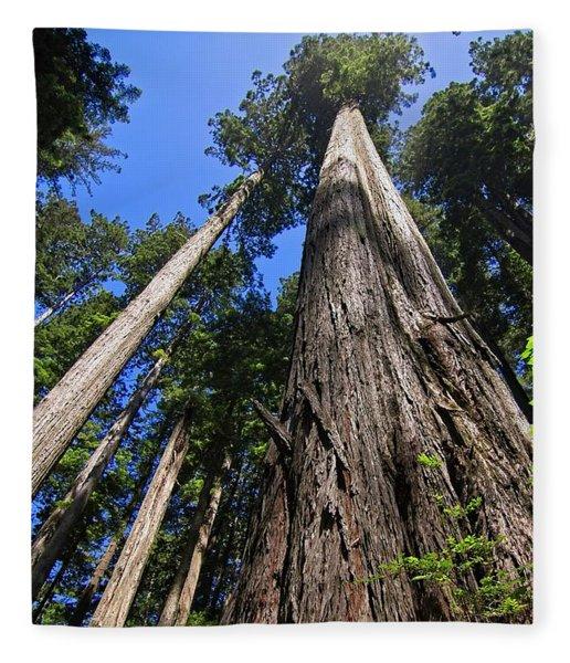 Towering Redwoods Fleece Blanket