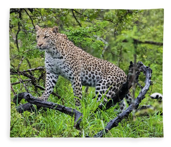 Tree Climbing Leopard Fleece Blanket