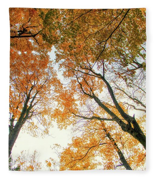 Trees Looking Up Fleece Blanket