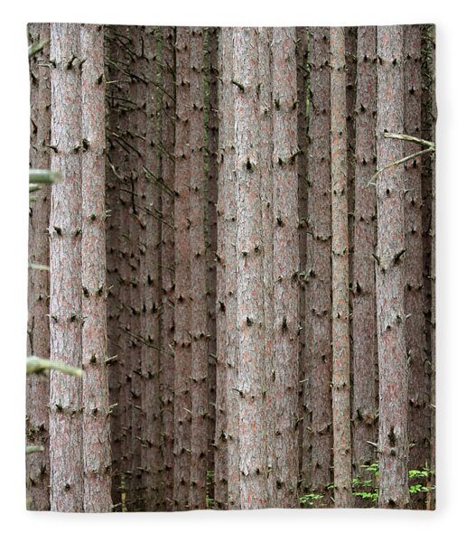 White Pines Fleece Blanket