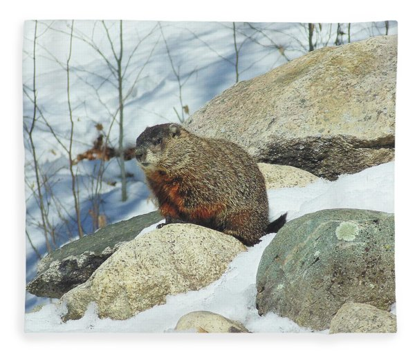 Fleece Blanket featuring the photograph Winter Groundhog by Amy E Fraser